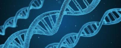 DNA testing in France